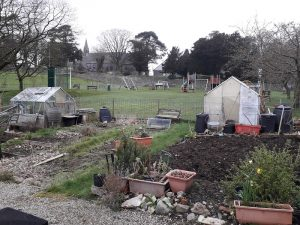 A view across the Lower Allithwaite Allotments, with veg patches and greenhouses