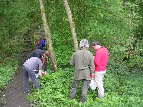Foraging for wild food - practical workshop