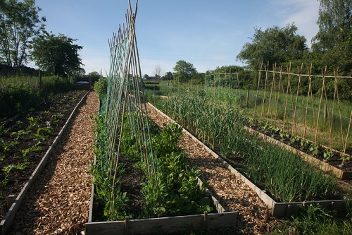 Learn about 'no dig' vegetable growing - site visit and tour
