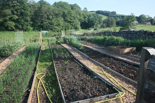 Raised vegetable beds at Glassonby Beck planted out with vegetables