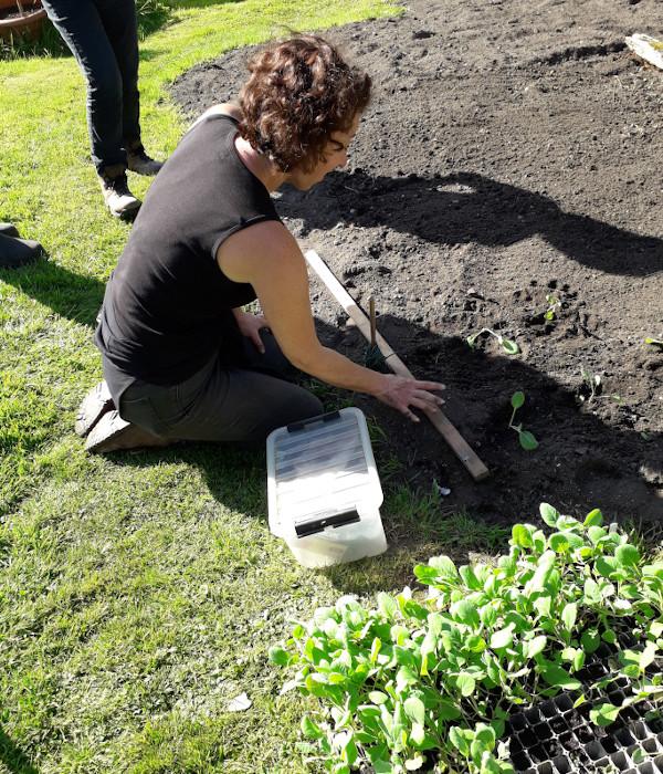 Growing veg in soil