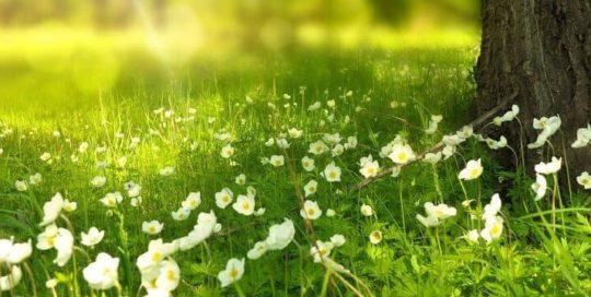 Meadow floor