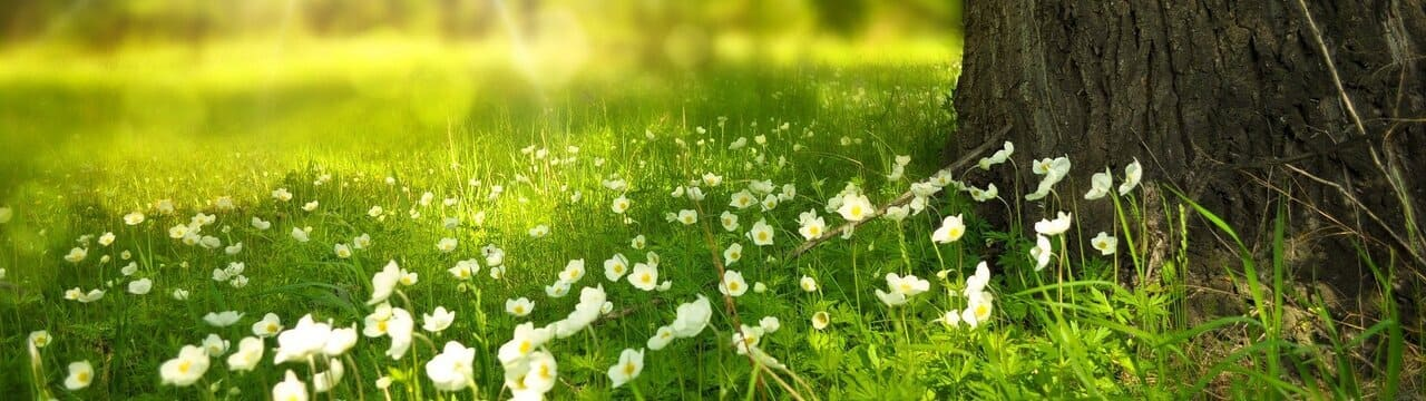 Meadow floor